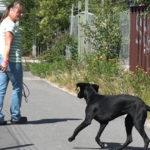 Webbkurser för hundägare; Inkallning och koppelträning