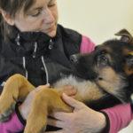 Webbkurs för hundägare - Klippa klor, borsta tänder och hantering
