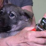Lär dig klippa hundens klor - Vovvepärons webbkurser för hundägare