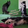 Webbkurs för hundägare; Sitta vackert, snurra runt och sova sött